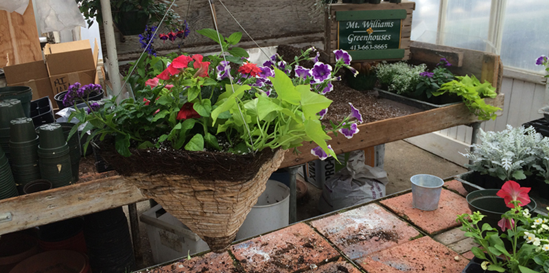 Mixed Container created by Chad Therrien of Mt. Williams Greenhouses, North Adams, MA; photo by Jason Velazquez