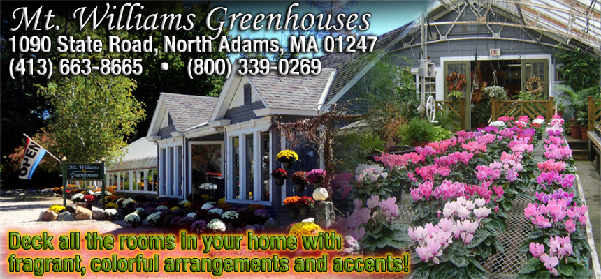 Thanks to our newest sponsor, Mt. Williams Greenhouses! From wreaths to poinsettias to holiday centerpieces, Mt. Williams Greenhouses, at 1090 State Road in North Adams, has all your floral holiday needs. Visit their website or drop by their Facebook page to find out about all the lively new arrivals!