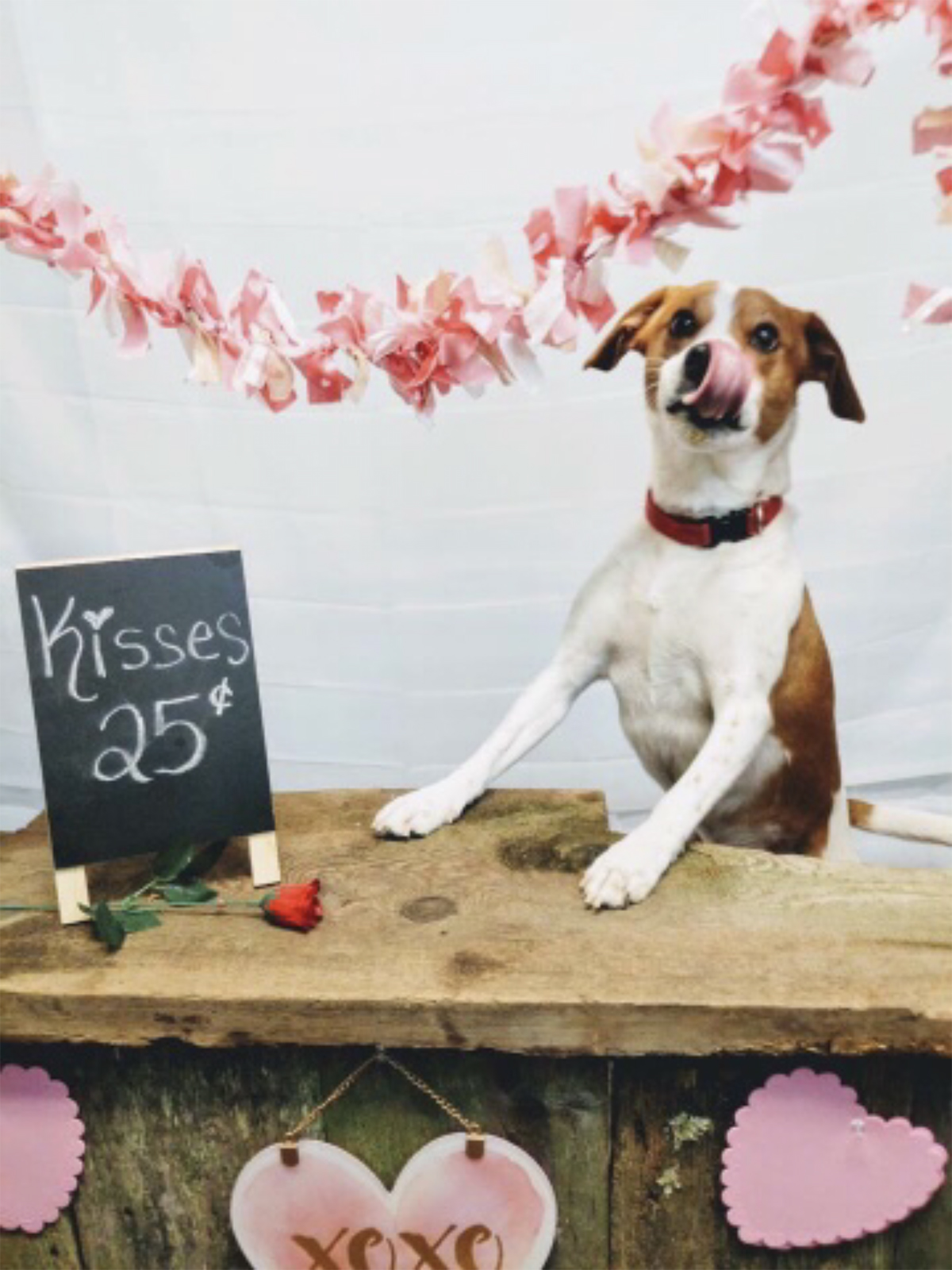 vito rsquo s kissing booth