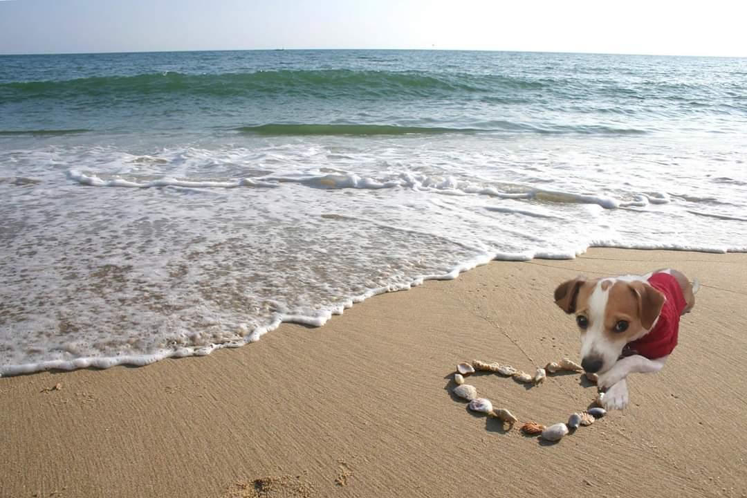 zippy sends you oceans of love